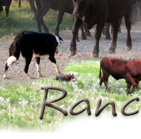 Ranch Dogs Save Time.