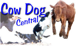 Cow Dog Central